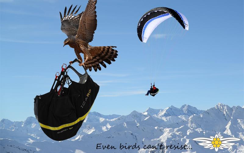 Icaro-paragliders-Energy-SP-nyhet_2
