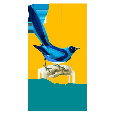 icaro_web_bird_pica